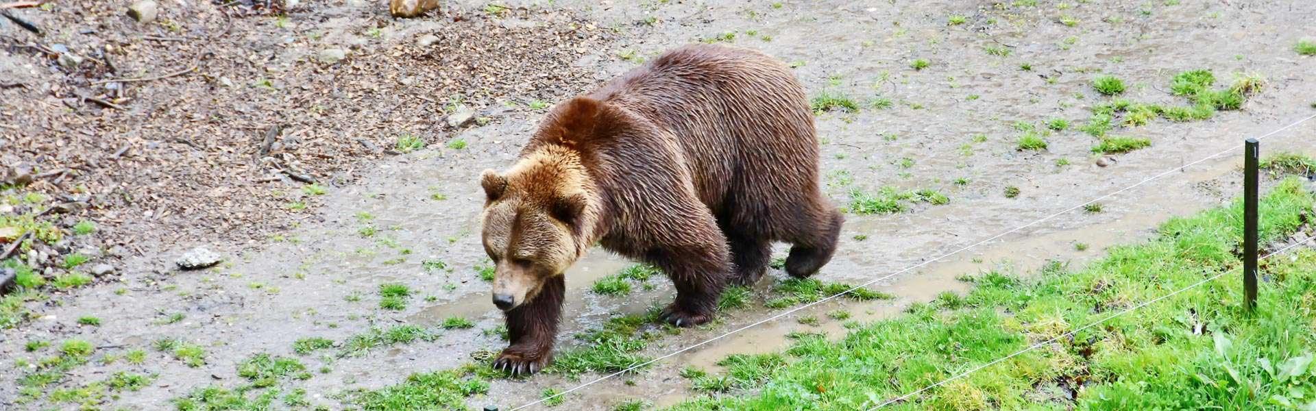Flora und Fauna bärenstark bestaunen – im Bärenpark, Bern