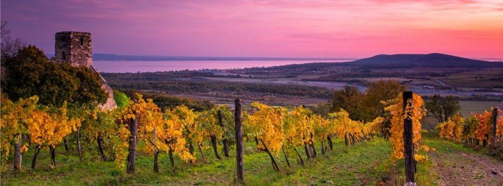 Blick auf die Weinregion am Balaton rund um den Plattensee